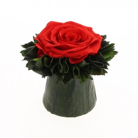 Rose stabilisée rouge vif